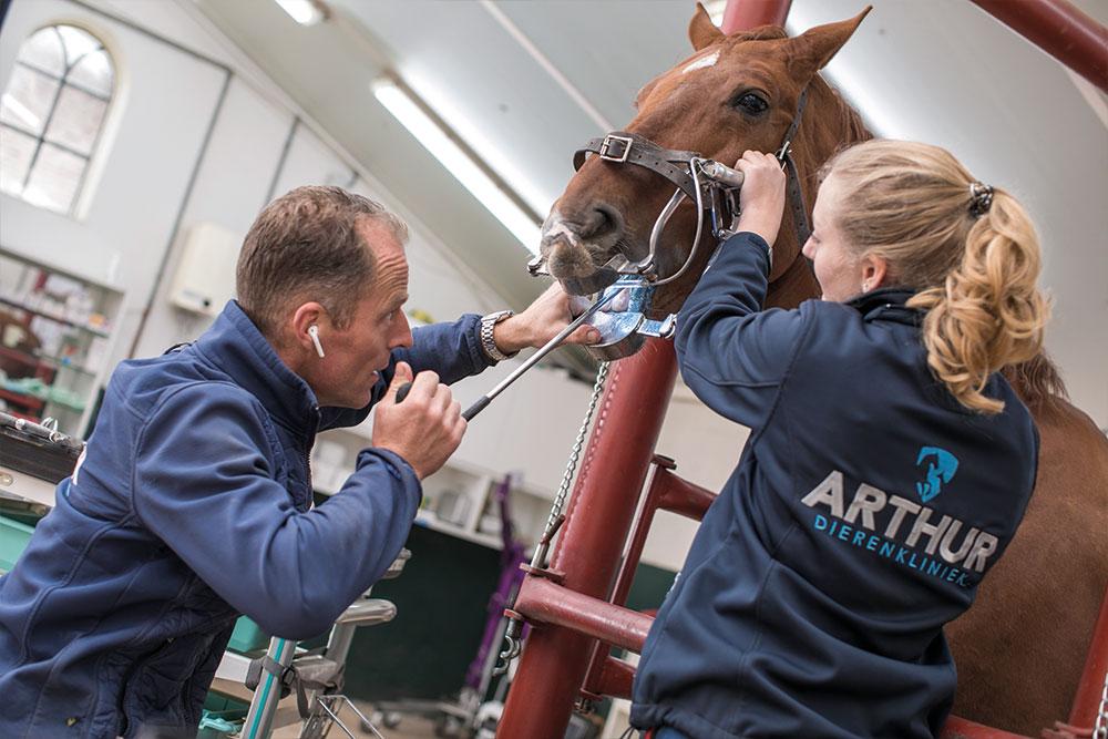 dierenkliniek arthur paardentandarts