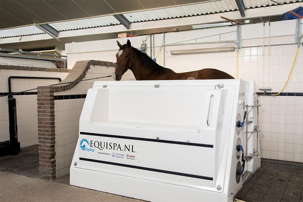 equine spa dierenkliniek arthur