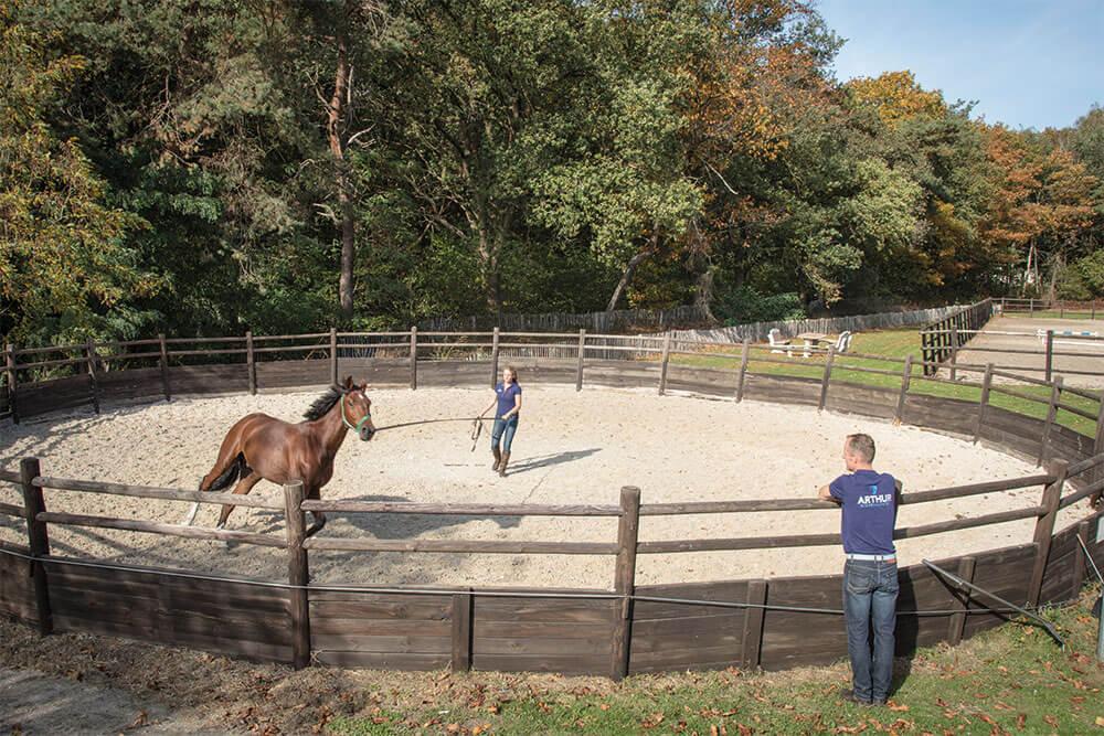 orthopedie arthur dierenkliniek paard