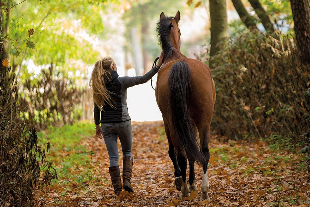 revalidatie arthur dierenkliniek paard