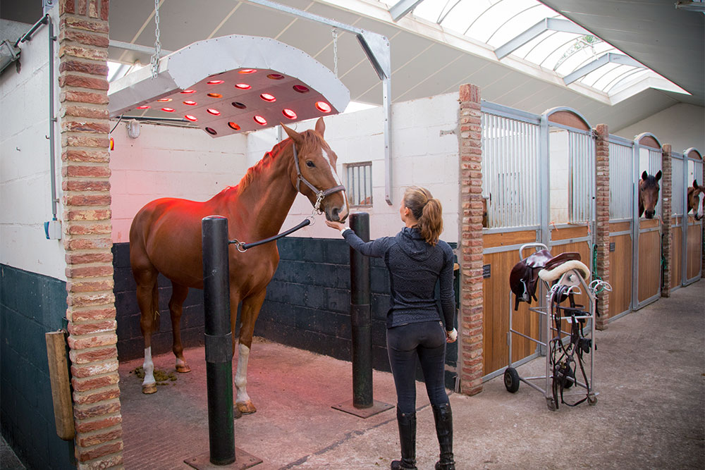 revalidatiestal dierenkliniek arthur paard